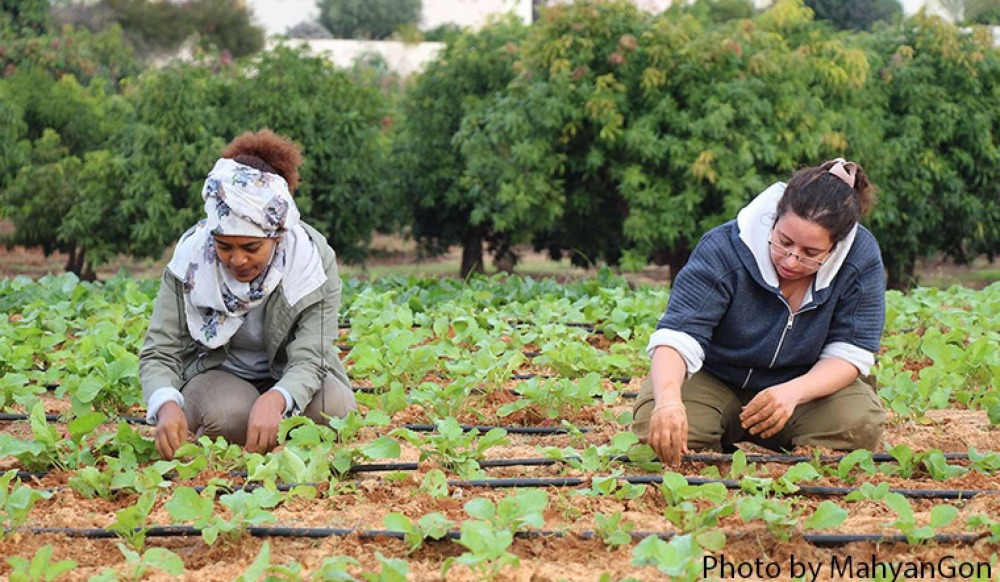 Agriculture Scholarships Image