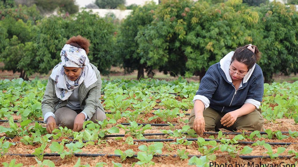 International Scholarships in Agriculture